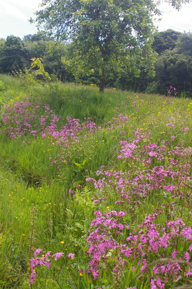 wildflower farm kent me13 shootfactory