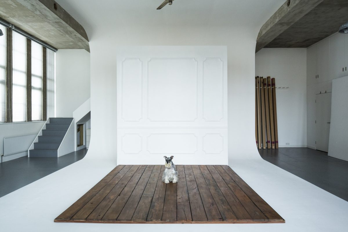 Dot Studio E5 - small dog - photographic studios - shootfactory location